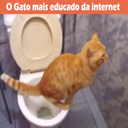 O Gato mais educado da internet usando a privada.