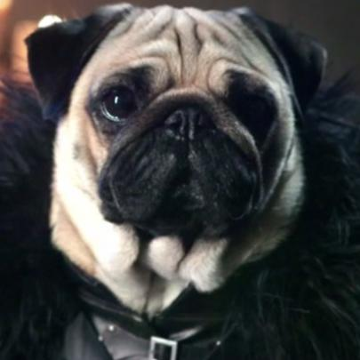 Pugs vestidos como personagens de