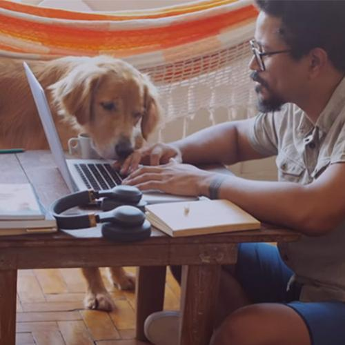 As alegrias do home-office ao lado dos pets